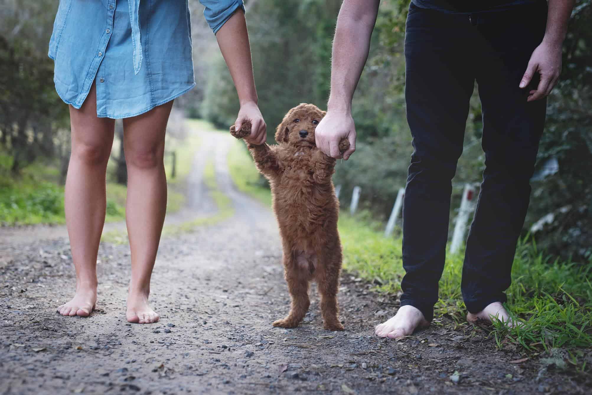 elisha-minnette-newborn-puppy-4