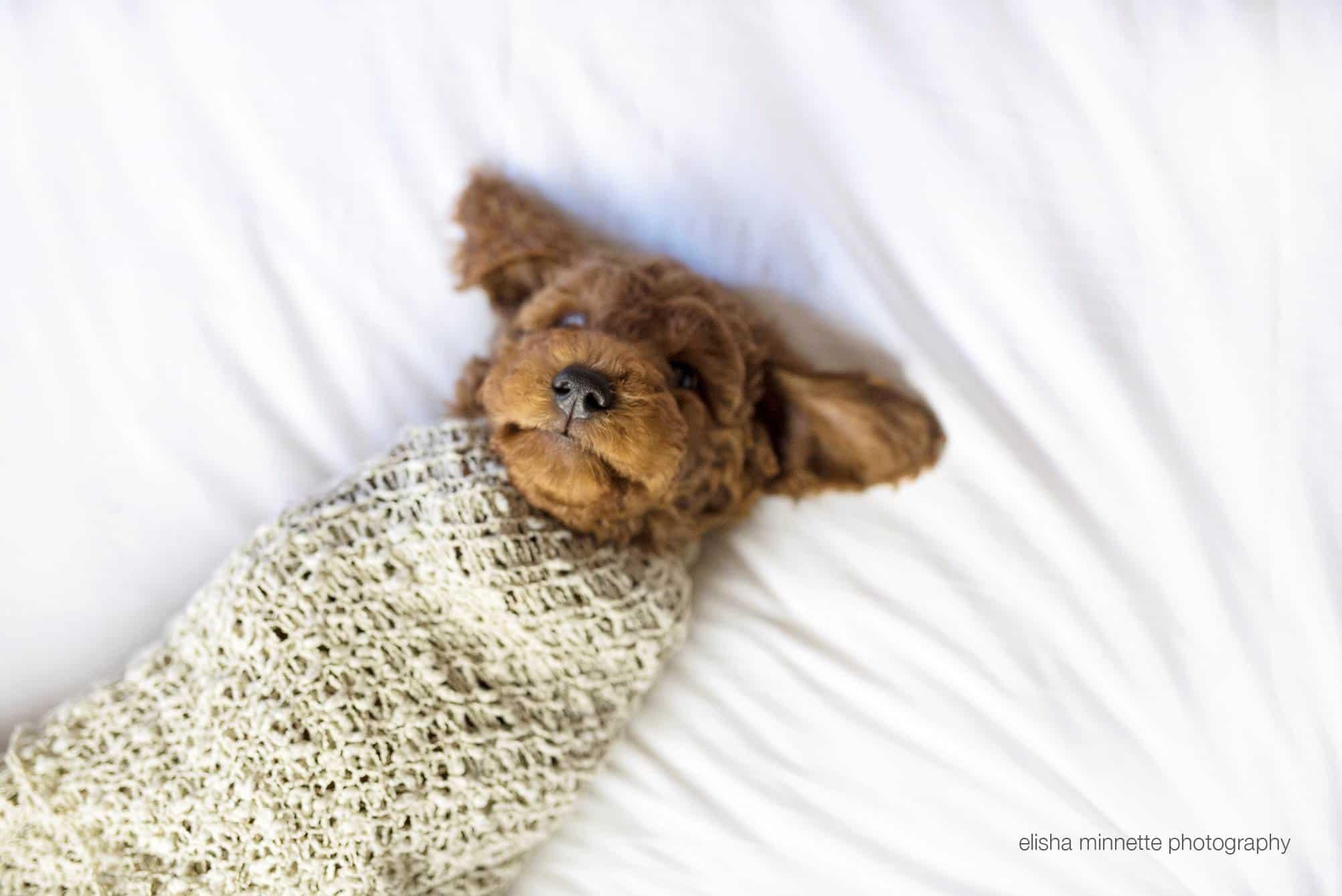 elisha-minnette-newborn-puppy-8